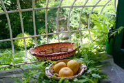 Suite in Sorrento: Detail of the window with the garden in the background of Suite Alimuri in Sorrento